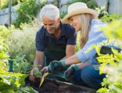 Physical Therapy Tips for Gardening & Yard Work Safety